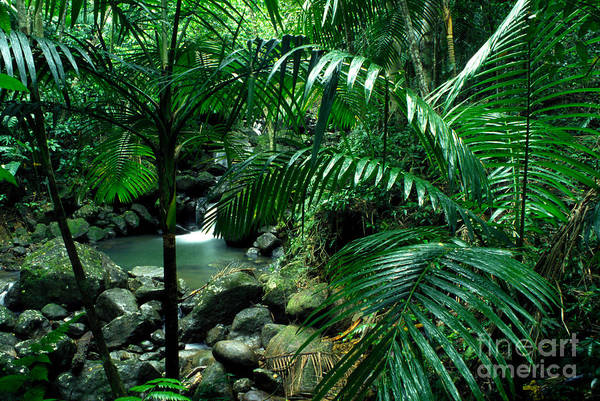 Photograph - Sierra Palms Waterfall El Yunque by Thomas R Fletcher
