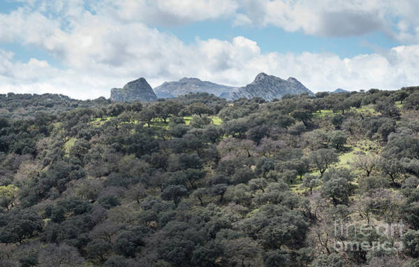 Art Print featuring the photograph Sierra Ronda, Andalucia Spain by Perry Rodriguez