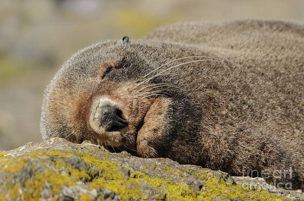 Photograph - Siesta Time by Werner Padarin