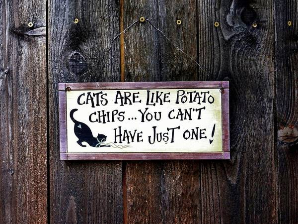 Photograph - Sign Of A Cat Lover by Patricia Strand