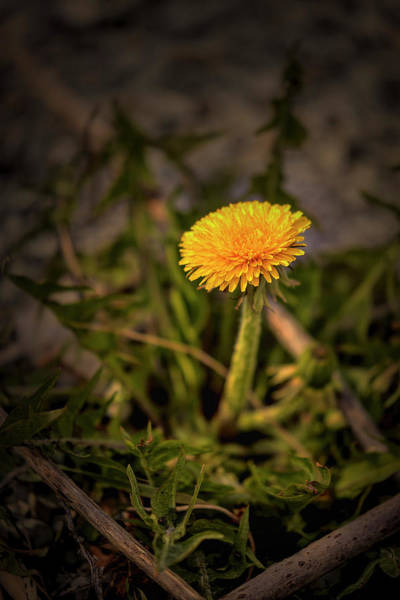 Photograph - Sign Of Spring #g3 by Leif Sohlman