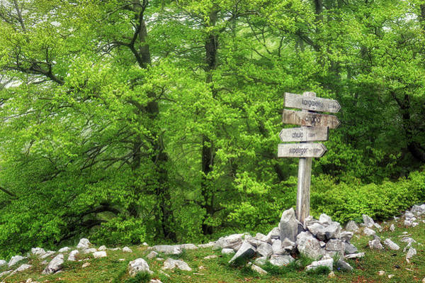 Wall Art - Photograph - Signpost In The Forest by Mikel Martinez de Osaba