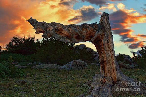 Photograph - Signpost by Jim Garrison