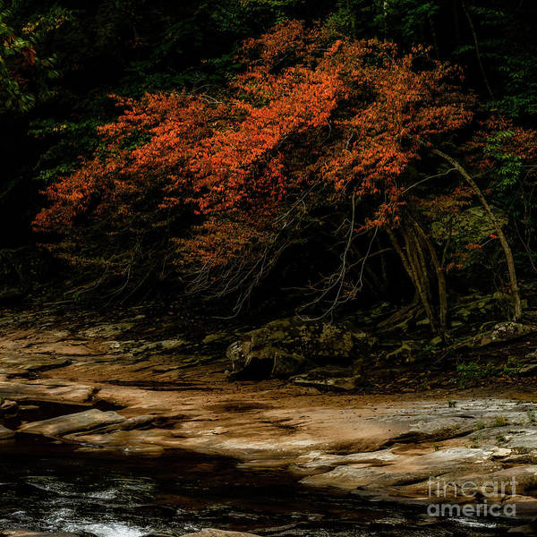 Wall Art - Photograph - Signs Of Fall by Thomas R Fletcher