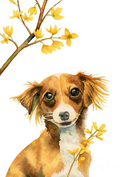 Forsythia Painting - Signs Of Spring - Cute Dog With Forsythia Watercolor Painting by NamiBear