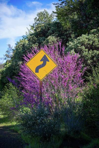 Photograph - Signs Of Spring In Shasta by Lynn Bauer