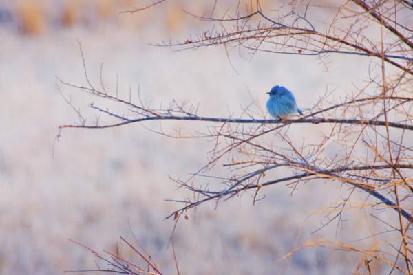 Photograph - Signs Of Spring by John De Bord