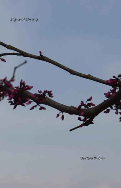Photograph - Signs Of Spring by Roberta Byram