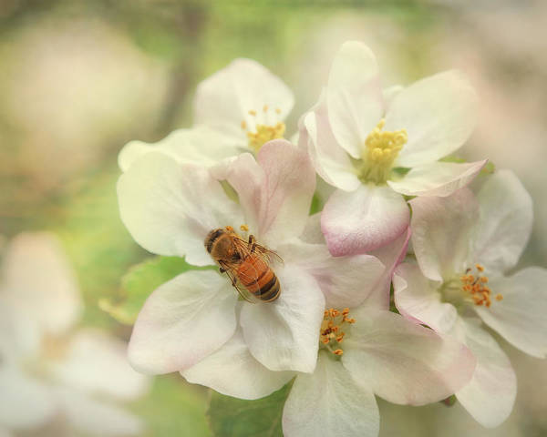 Honeybees Wall Art - Photograph - Signs Of Spring by Susan Capuano