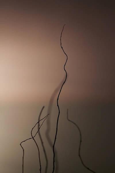 Wall Art - Photograph - Silence by Evelina Kremsdorf