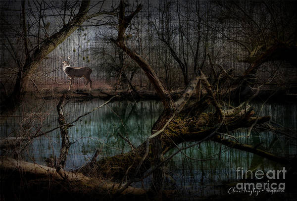 Digital Art - Silent Forest by Chris Armytage