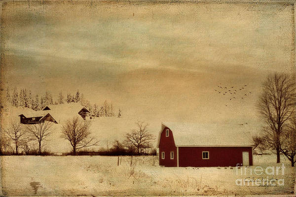 Digital Art - Silent Morning by Chris Armytage