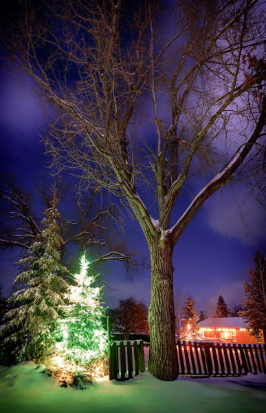 Wall Art - Photograph - Silent Night by Cat Connor