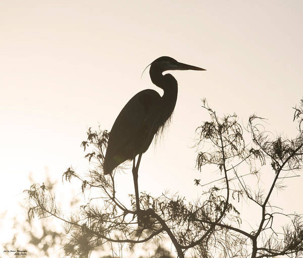 Photograph - Silhouette In The Sunset by Sally Sperry