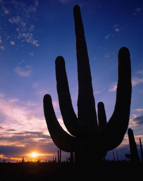 Maricopa Photograph - Silhouette Of A Cactus, Four Peaks by Panoramic Images
