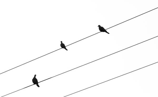 Outdoor Wall Art - Photograph - Silhouette Of Birds Sitting On Electric Cables by Michalakis Ppalis