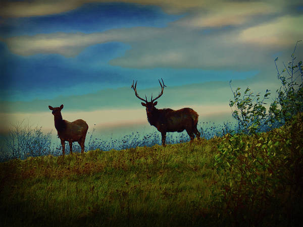 Digital Art - Silhouette Of Bull And Cow Elk. by Rusty R Smith