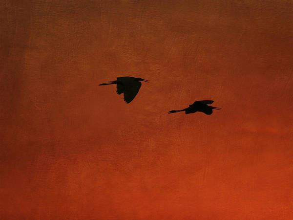 Photograph - Silhouette Of Egrets by Charles McKelroy