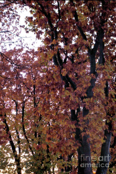 Photograph - Silhouette Of Fall 5 by Victor K