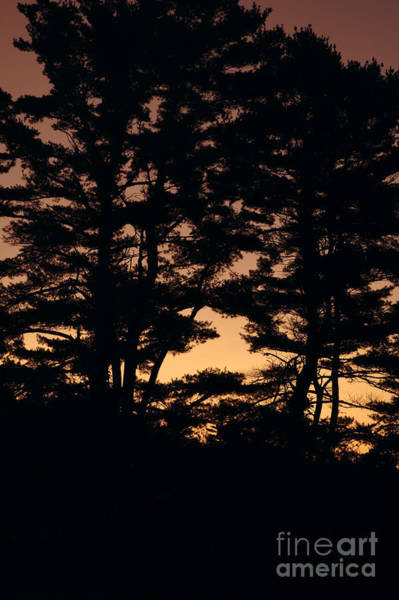 Photograph - Silhouette Of Forest  by Erin Paul Donovan