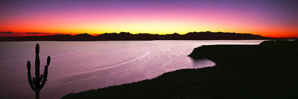 Sea Of Cortez Photograph - Silhouette Of Lone Cardon Cactus Plant by Panoramic Images
