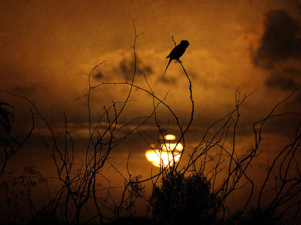 Photograph - Silhouette Of Sparrow by Charles McKelroy