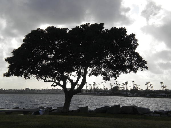 Photograph - Silhouette Of Tree by Bridgette Gomes