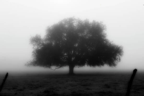 Photograph - Silhouette Of Tree In Field by Dan Friend