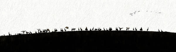 Photograph - Silhouette  Sandhills Crane Birds On Hill by Dan Friend