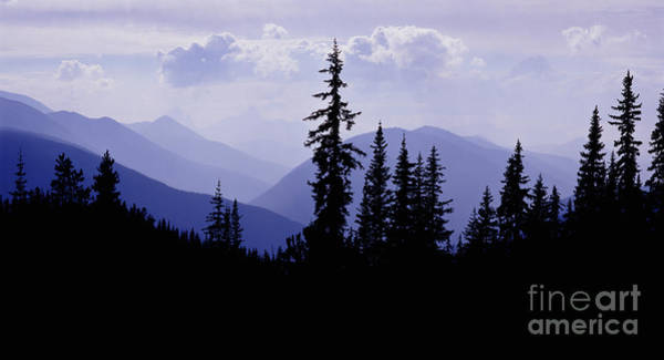 Photograph - Silhouette Subalpine Firs by Warren Photographic