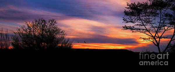 Wall Art - Photograph - Silhouette Sunset by Lena Auxier