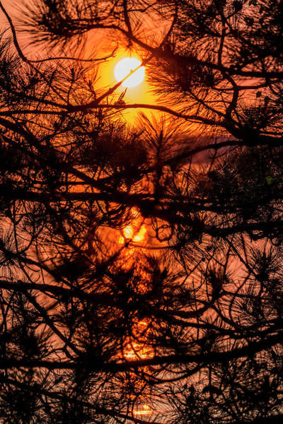 Photograph - Silhouette Sunset by Patti Deters