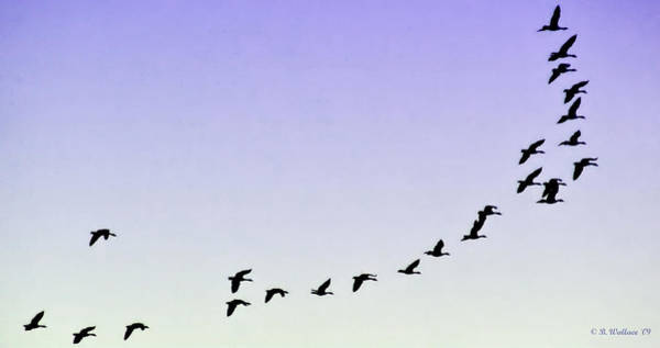 Wall Art - Photograph - Silhouetted Flight by Brian Wallace