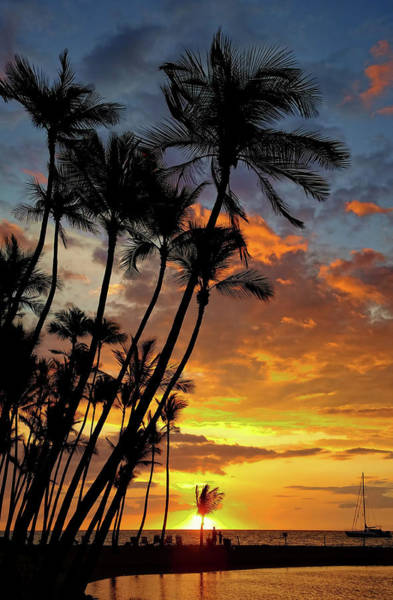 Photograph - Silhouetted Palms by Pamela Walton