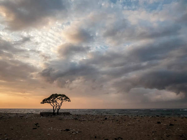 Photograph - Silhouetted Trees At Kekaha Beach Hawaii by Mary Lee Dereske