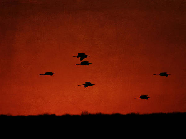 Photograph - Silhouettes Of Egrets by Charles McKelroy