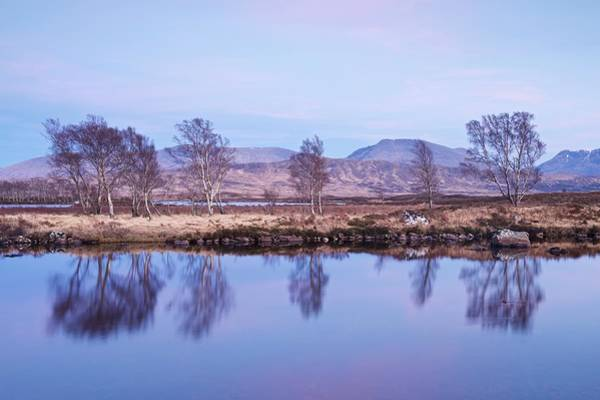 Photograph - Silver Birches On Loch Ba by Stephen Taylor