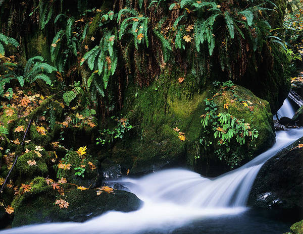 Photograph - Silver Creek And Ferns by Robert Potts