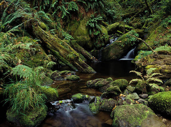 Photograph - Silver Creek by Robert Potts