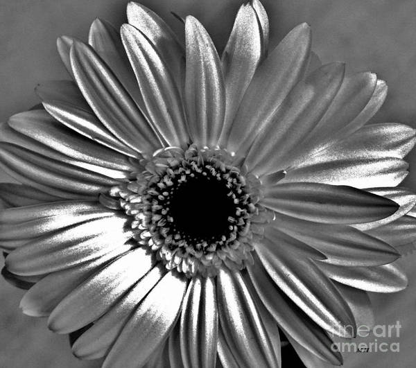 Wall Art - Digital Art - Silver Digital Daisy by Marsha Heiken