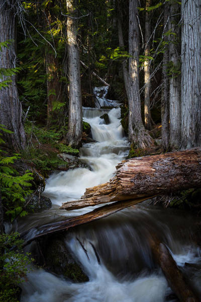 Photograph - Silver Falls by Jason Roberts