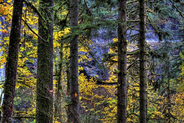 Photograph - Silver Falls State Park Oregon 2 by Lee Santa