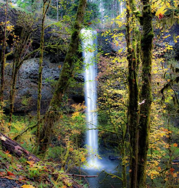 Photograph - Silver Falls State Park Oregon 3 by Lee Santa