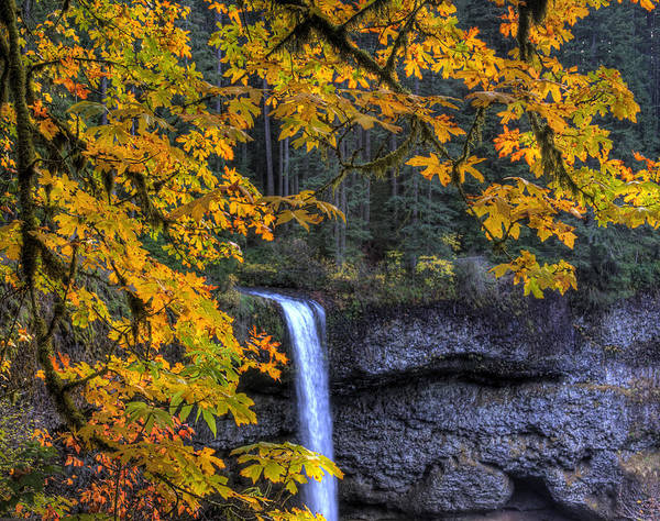 Photograph - Silver Falls State Park Oregon by Lee Santa