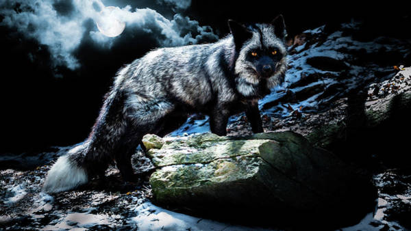 Silver Fox In Moonlight. Art Print