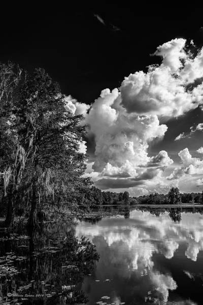 Bald Cypress Wall Art - Photograph - Silver Linings by Marvin Spates