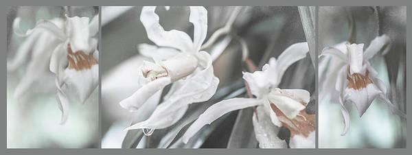 Silver Melody. Triptych Art Print