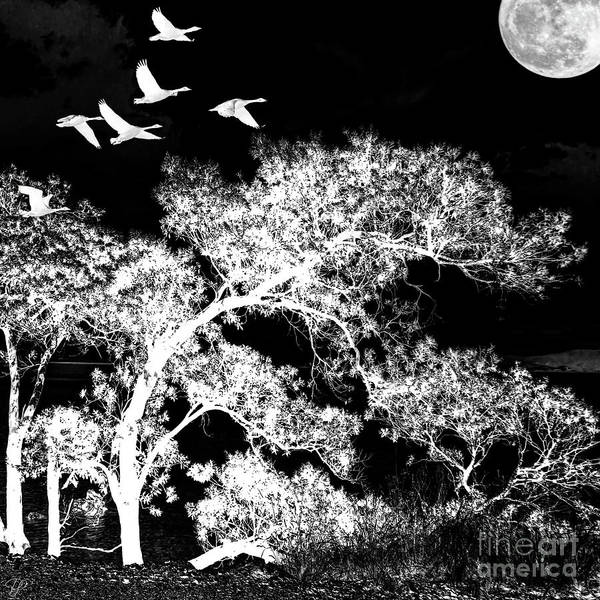 Photograph - Silver Nights by LemonArt Photography