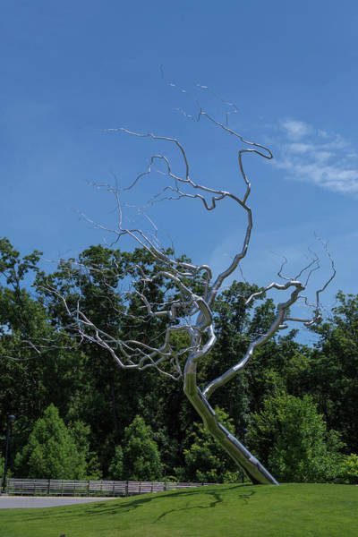 Photograph - Silver Tree by Jim Shackett