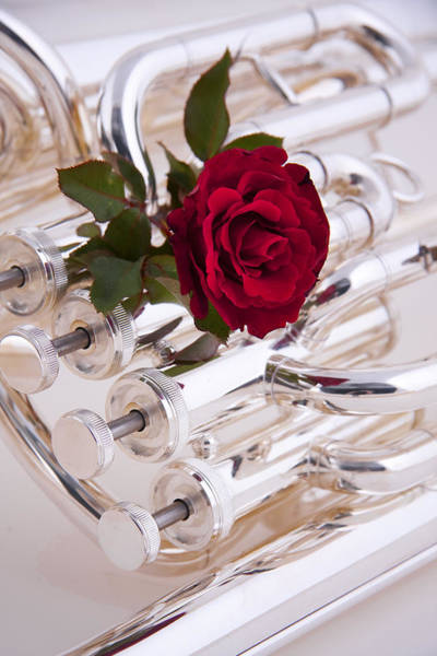 Photograph - Silver Tuba With Red Rose On White by M K Miller